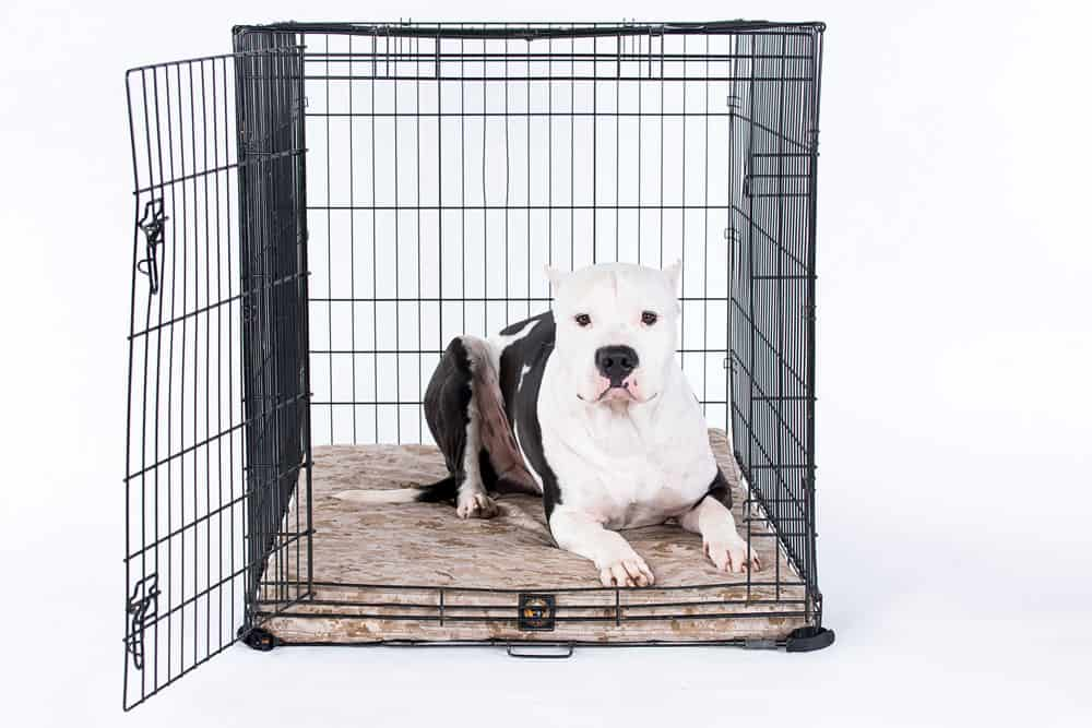 Durable American Made Kennel Amp Crate Pads Tough Crate Pads